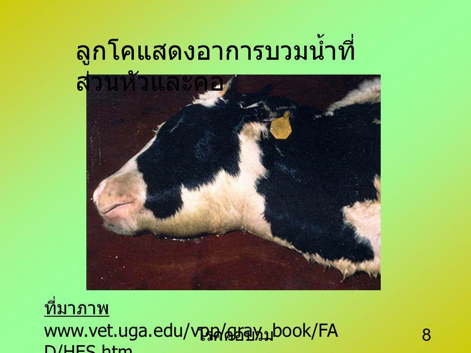 โรคคอบวม 7 สารพิษที่เชื้อ สร้างขึ้นทำให้ คอบวมกด หลอดลม ทำ ให้สัตว์หายใจ ลำบากมาก อาการ ในกระบือสัตว์มี อาการแบบ peracute ไข้สูง คอบวม ปอดบวม อย่างรุน