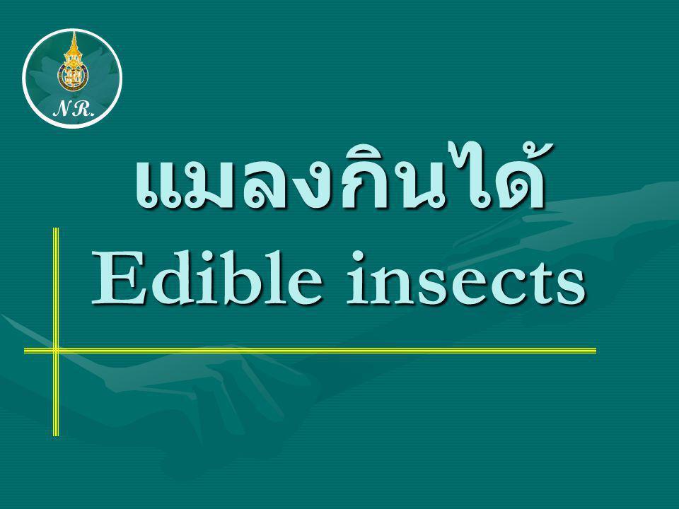 แมลงกินได้ Edible insects NR.