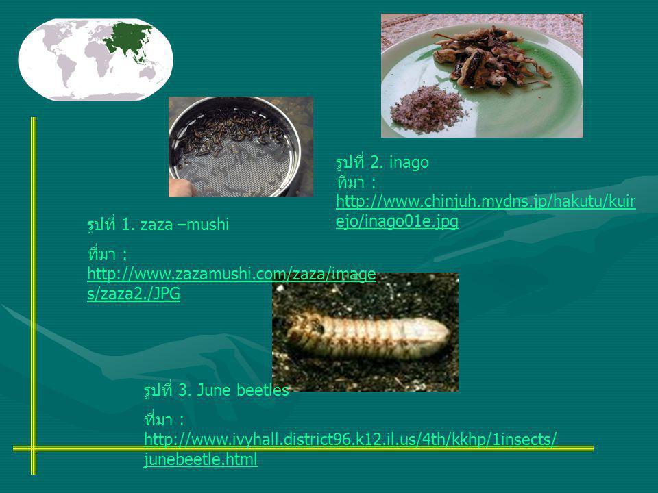 รูปที่ 1. zaza –mushi ที่มา : http://www.zazamushi.com/zaza/image s/zaza2./JPG รูปที่ 2. inago ที่มา : http://www.chinjuh.mydns.jp/hakutu/kuir ejo/ina
