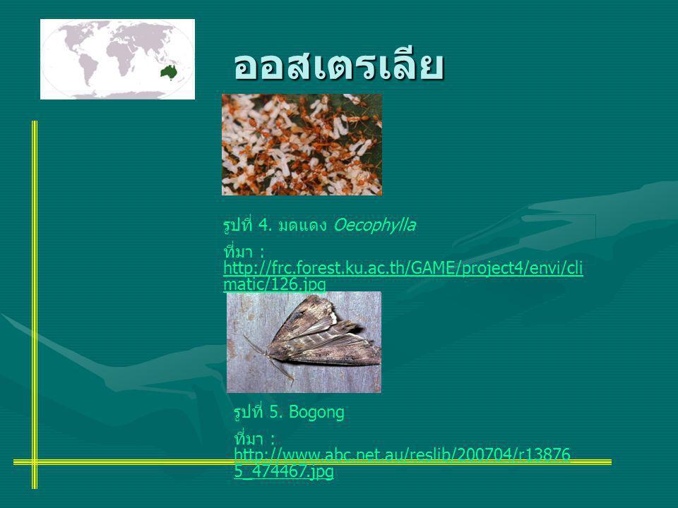 ออสเตรเลีย รูปที่ 4. มดแดง Oecophylla ที่มา : http://frc.forest.ku.ac.th/GAME/project4/envi/cli matic/126.jpg รูปที่ 5. Bogong ที่มา : http://www.abc.