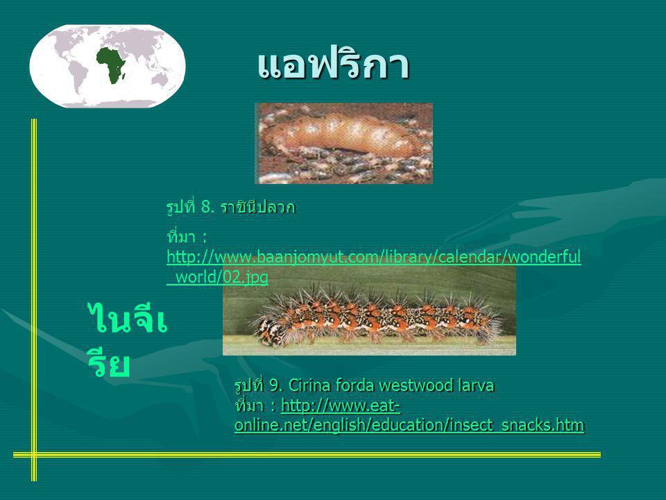 แอฟริกา รูปที่ 9. Cirina forda westwood larva ที่มา : http://www.eat- online.net/english/education/insect_snacks.htm http://www.eat- online.net/englis