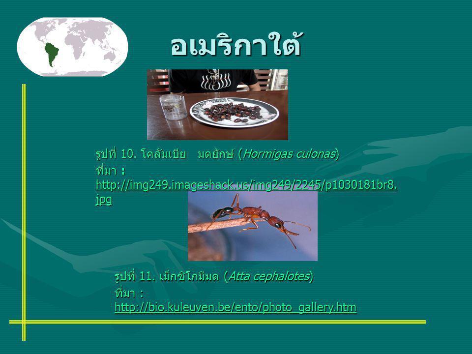 อเมริกาใต้ รูปที่ 10. โคลัมเบีย มดยักษ์ (Hormigas culonas) ที่มา : http://img249.imageshack.us/img249/2245/p1030181br8. jpg รูปที่ 11. เม็กซิโกมีมด (A