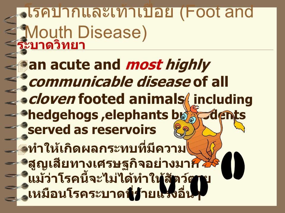 โรคปากและเท้าเปื่อย (Foot and Mouth Disease) ระบาดวิทยา  an acute and most highly communicable disease of all cloven footed animals; including hedgehogs,elephants but rodents served as reservoirs  ทำให้เกิดผลกระทบที่มีความ สูญเสียทางเศรษฐกิจอย่างมาก แม้ว่าโรคนี้จะไม่ได้ทำให้สัตว์ตาย เหมือนโรคระบาดที่ร้ายแรงอื่นๆ