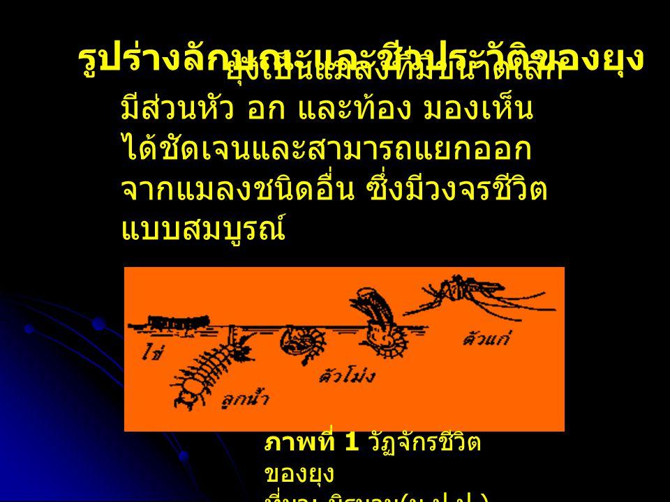 ภาพที่ 1 วัฏจักรชีวิต ของยุง ที่มา : นิรนาม ( ม.ป.