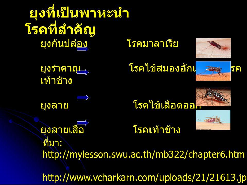 ยุงที่เป็นพาหะนำ โรคที่สำคัญ ยุงก้นปล่อง โรคมาลาเรีย ยุงรำคาญ โรคไข้สมองอักเสบและโรค เท้าช้าง ยุงลาย โรคไข้เลือดออก ยุงลายเสือ โรคเท้าช้าง ที่มา : http://mylesson.swu.ac.th/mb322/chapter6.htm http://www.vcharkarn.com/uploads/21/21613.jpg