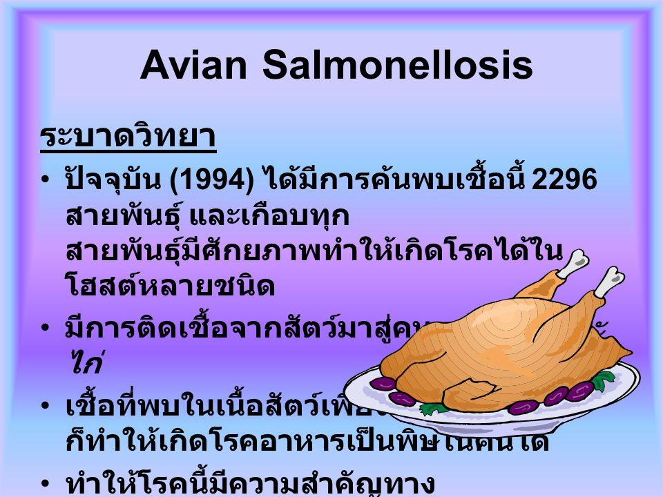 Avian Salmonellosis ระบาดวิทยา ปัจจุบัน (1994) ได้มีการค้นพบเชื้อนี้ 2296 สายพันธุ์ และเกือบทุก สายพันธุ์มีศักยภาพทำให้เกิดโรคได้ใน โฮสต์หลายชนิด มีกา