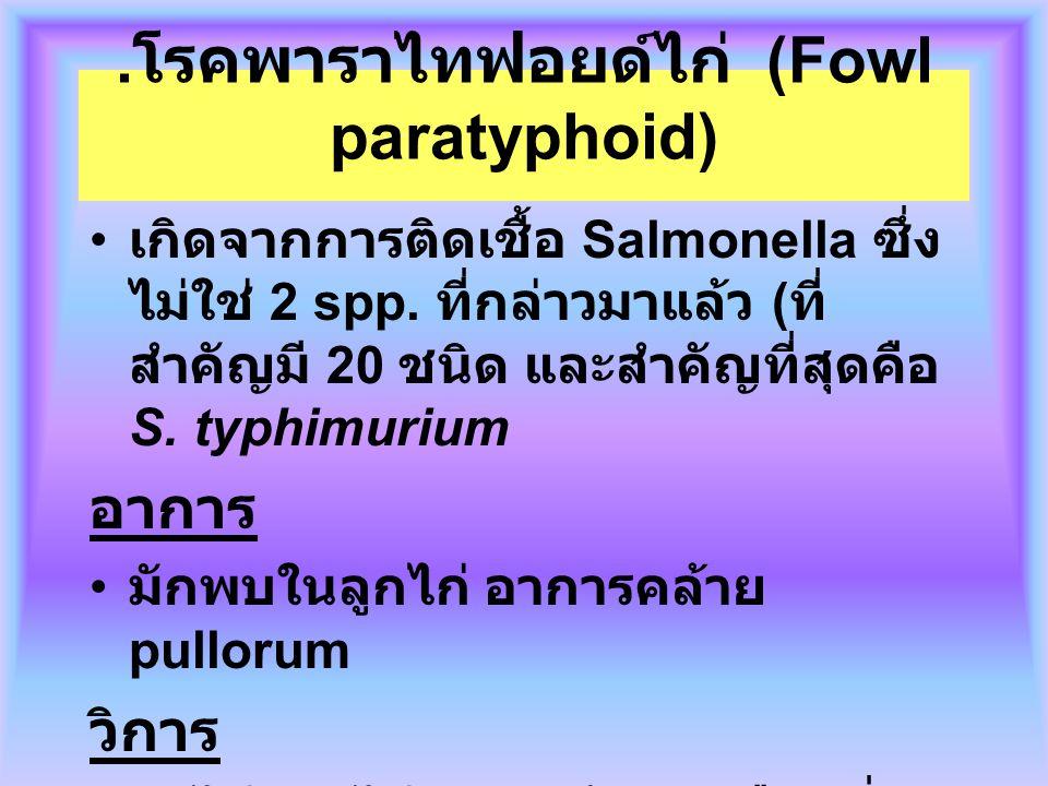 . โรคพาราไทฟอยด์ไก่ (Fowl paratyphoid) เกิดจากการติดเชื้อ Salmonella ซึ่ง ไม่ใช่ 2 spp. ที่กล่าวมาแล้ว ( ที่ สำคัญมี 20 ชนิด และสำคัญที่สุดคือ S. typh