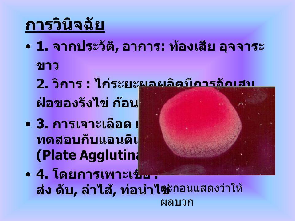 การวินิจฉัย 1. จากประวัติ, อาการ : ท้องเสีย อุจจาระ ขาว 2. วิการ : ไก่ระยะผลผลิตมีการอักเสบ ฝ่อของรังไข่ ก้อนไข่แดง ถุงน้อย ฝ่อ 3. การเจาะเลือด เก็บซี