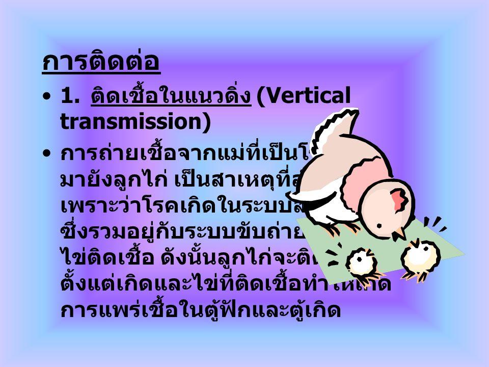 การติดต่อ 1. ติดเชื้อในแนวดิ่ง (Vertical transmission) การถ่ายเชื้อจากแม่ที่เป็นโรค มายังลูกไก่ เป็นสาเหตุที่สำคัญมาก เพราะว่าโรคเกิดในระบบสืบพันธุ์ ซ