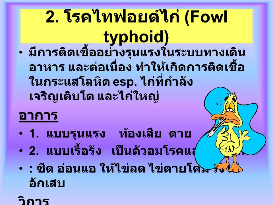 2. โรคไทฟอยด์ไก่ (Fowl typhoid) มีการติดเชื้ออย่างรุนแรงในระบบทางเดิน อาหาร และต่อเนื่อง ทำให้เกิดการติดเชื้อ ในกระแสโลหิต esp. ไก่ที่กำลัง เจริญเติบโ