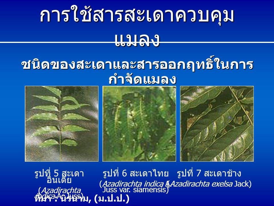 การใช้สารสะเดาควบคุม แมลง ชนิดของสะเดาและสารออกฤทธิ์ในการ กำจัดแมลง รูปที่ 5 สะเดา อินเดีย (Azadirachta indica A. Juss) รูปที่ 6 สะเดาไทย (Azadirachta