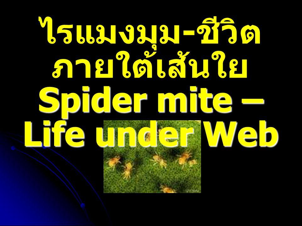 เส้นใยของไรแมงมุม ที่มา : htpp://www. Spide Mites.htm