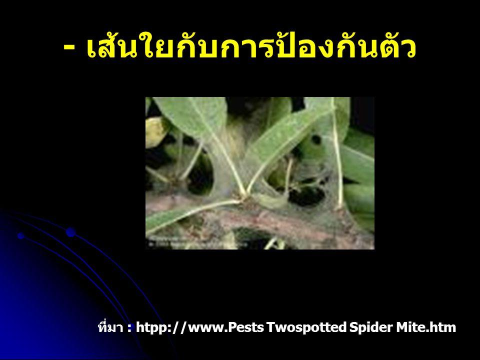 - เส้นใยกับการป้องกันตัว ที่มา : htpp://www.Pests Twospotted Spider Mite.htm