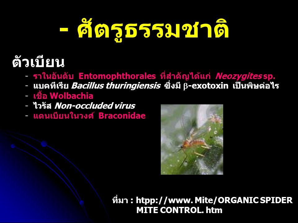- ศัตรูธรรมชาติ ตัวเบียน - ราในอันดับ Entomophthorales ที่สำคัญได้แก่ Neozygites sp. - แบคทีเรีย Bacillus thuringiensis ซึ่งมี  -exotoxin เป็นพิษต่อไ