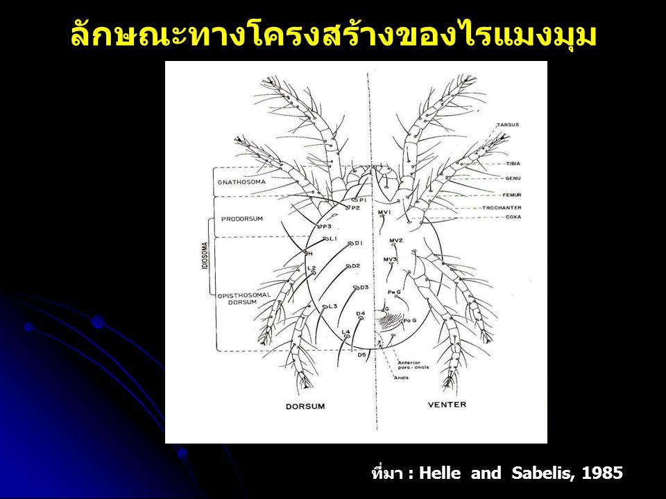 ลักษณะทางโครงสร้างของไรแมงมุม ที่มา : Helle and Sabelis, 1985