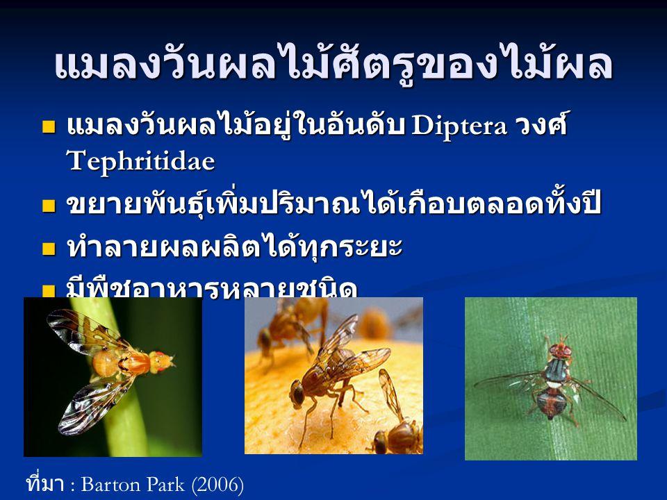 วงจรชีวิตแมลงวันไม้ ที่มา : สังวรณ์ กิจทวี (2545)