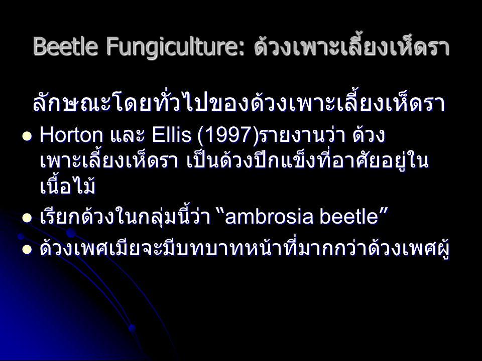 Beetle Fungiculture: ด้วงเพาะเลี้ยงเห็ดรา ลักษณะโดยทั่วไปของด้วงเพาะเลี้ยงเห็ดรา Horton และ Ellis (1997) รายงานว่า ด้วง เพาะเลี้ยงเห็ดรา เป็นด้วงปีกแข็งที่อาศัยอยู่ใน เนื้อไม้ Horton และ Ellis (1997) รายงานว่า ด้วง เพาะเลี้ยงเห็ดรา เป็นด้วงปีกแข็งที่อาศัยอยู่ใน เนื้อไม้ เรียกด้วงในกลุ่มนี้ว่า ambrosia beetle เรียกด้วงในกลุ่มนี้ว่า ambrosia beetle ด้วงเพศเมียจะมีบทบาทหน้าที่มากกว่าด้วงเพศผู้ ด้วงเพศเมียจะมีบทบาทหน้าที่มากกว่าด้วงเพศผู้