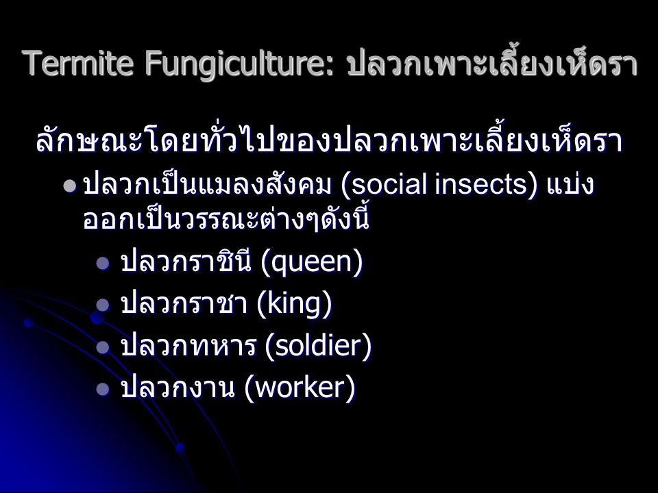 Termite Fungiculture: ปลวกเพาะเลี้ยงเห็ดรา ลักษณะโดยทั่วไปของปลวกเพาะเลี้ยงเห็ดรา ปลวกเป็นแมลงสังคม (social insects) แบ่ง ออกเป็นวรรณะต่างๆดังนี้ ปลวกเป็นแมลงสังคม (social insects) แบ่ง ออกเป็นวรรณะต่างๆดังนี้ ปลวกราชินี (queen) ปลวกราชินี (queen) ปลวกราชา (king) ปลวกราชา (king) ปลวกทหาร (soldier) ปลวกทหาร (soldier) ปลวกงาน (worker) ปลวกงาน (worker)