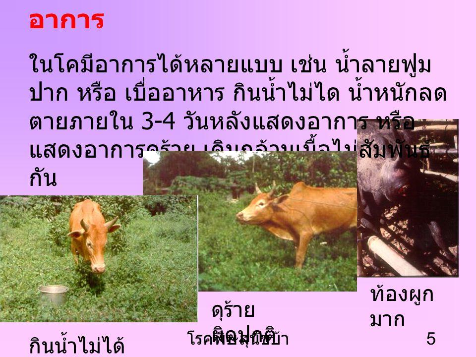 โรคพิษสุนัขบ้า 4 สาเหตุ เกิดจากเชื้อไวรัส Rhabdovirus การติดต่อ การถูกสุนัข หรือสัตว์ที่เป็นบ้ากัดหรือ สัมผัสน้ำลายสัตว์ที่เป็นบ้า มีระยะฟักตัว ของโรค
