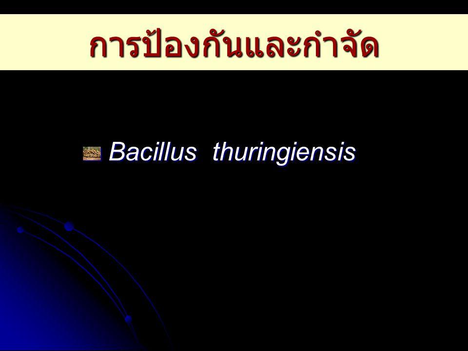 การป้องกันและกำจัด Bacillus thuringiensis Bacillus thuringiensis