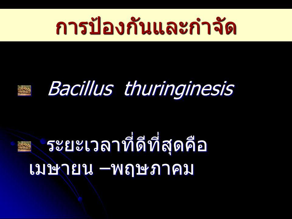 การป้องกันและกำจัด Bacillus thuringinesis ระยะเวลาที่ดีที่สุดคือ เมษายน – พฤษภาคม