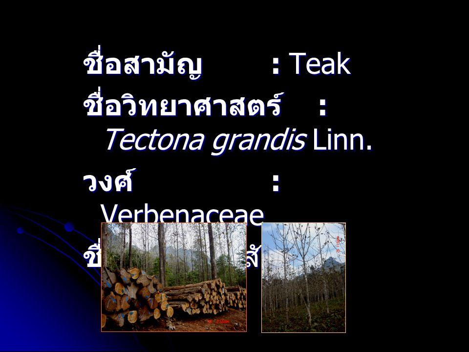 ชื่อสามัญ : Teak ชื่อวิทยาศาสตร์ : Tectona grandis Linn. วงศ์ : Verbenaceae ชื่ออื่นๆ : สักทอง, กระเบียด