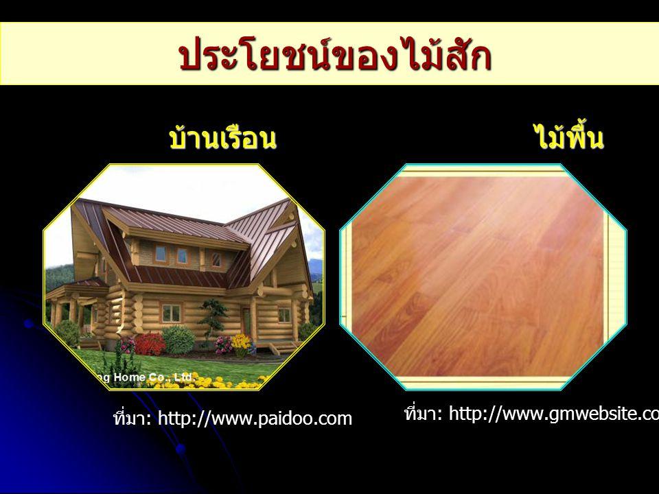 บ้านเรือน ไม้พื้น บ้านเรือน ไม้พื้น ที่มา : http://www.paidoo.com ที่มา : http://www.gmwebsite.com ประโยชน์ของไม้สัก