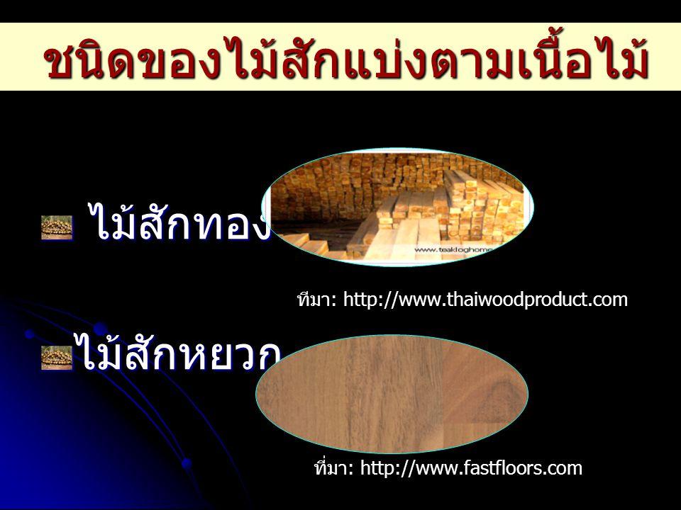 ชนิดของไม้สักแบ่งตามเนื้อไม้ ไม้สักทอง ไม้สักทอง ไม้สักหยวก ไม้สักไข ไม้สักไข ไม้สักหิน ไม้สักหิน ไม้สักไข ไม้สักไข ที่มา : http://www.fastfloors.com