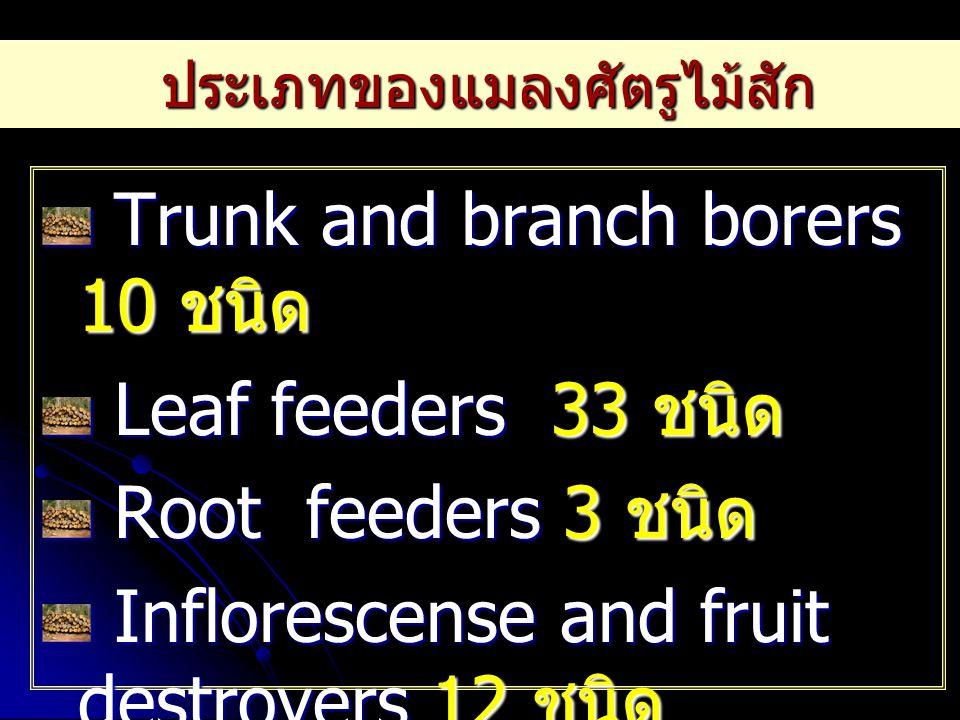 ประเภทของแมลงศัตรูไม้สัก Trunk and branch borers 10 ชนิด Trunk and branch borers 10 ชนิด Leaf feeders 33 ชนิด Leaf feeders 33 ชนิด Root feeders 3 ชนิด