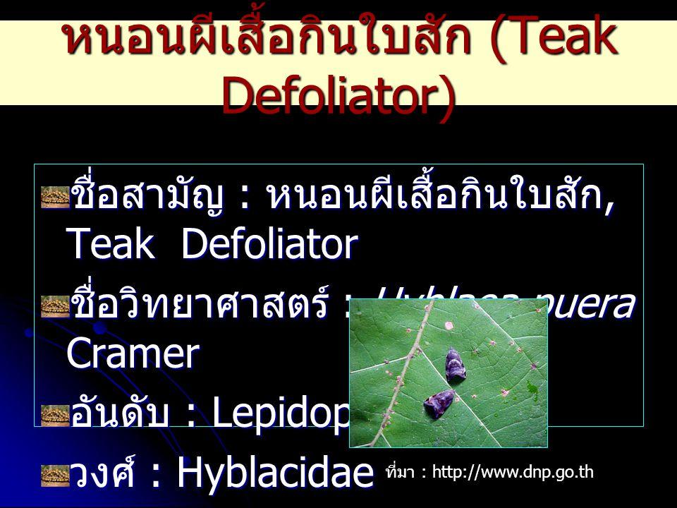 หนอนผีเสื้อกินใบสัก (Teak Defoliator) ชื่อสามัญ : หนอนผีเสื้อกินใบสัก, Teak Defoliator ชื่อวิทยาศาสตร์ : Hyblaea puera Cramer อันดับ : Lepidoptera วงศ