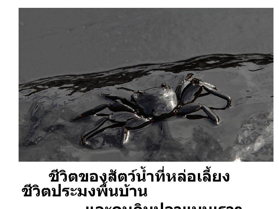 ชีวิตของสัตว์น้ำที่หล่อเลี้ยง ชีวิตประมงพื้นบ้าน และคนกินปลาแบบเราๆ