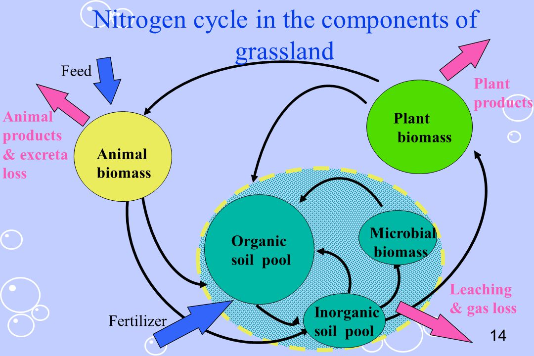 14 Nitrogen cycle in the components of grassland Feed Animal products & excreta loss Fertilizer Leaching & gas loss Plant products Animal biomass Orga