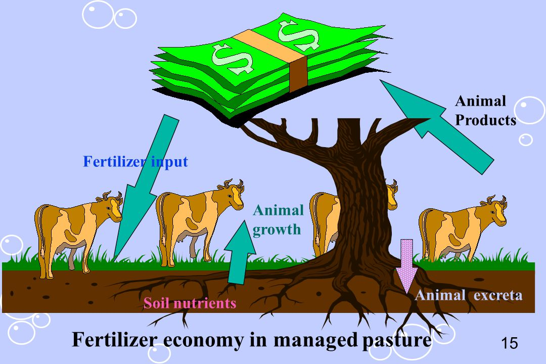 15 Fertilizer input Soil nutrients Animal growth Animal Products Fertilizer economy in managed pasture Animal excreta