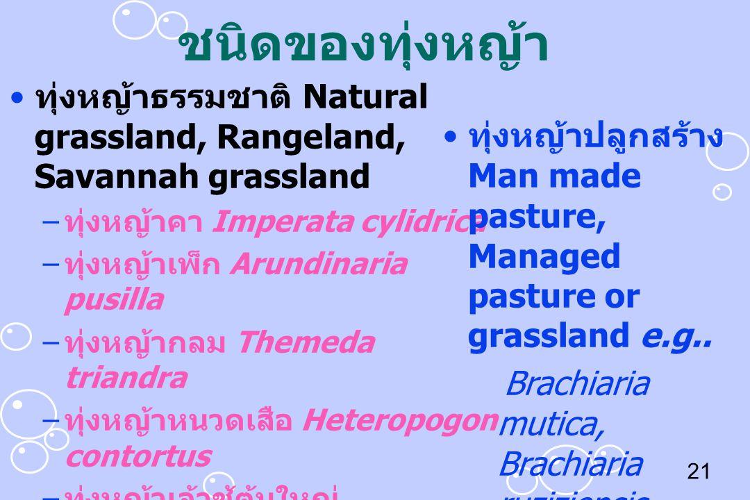 21 ชนิดของทุ่งหญ้า ทุ่งหญ้าธรรมชาติ Natural grassland, Rangeland, Savannah grassland – ทุ่งหญ้าคา Imperata cylidrica – ทุ่งหญ้าเพ็ก Arundinaria pusill