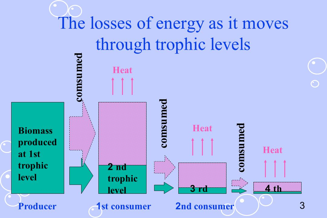 3 The losses of energy as it moves through trophic levels comsumed Biomass produced at 1st trophic level 2 nd trophic level 3 rd4 th Heat Producer1st