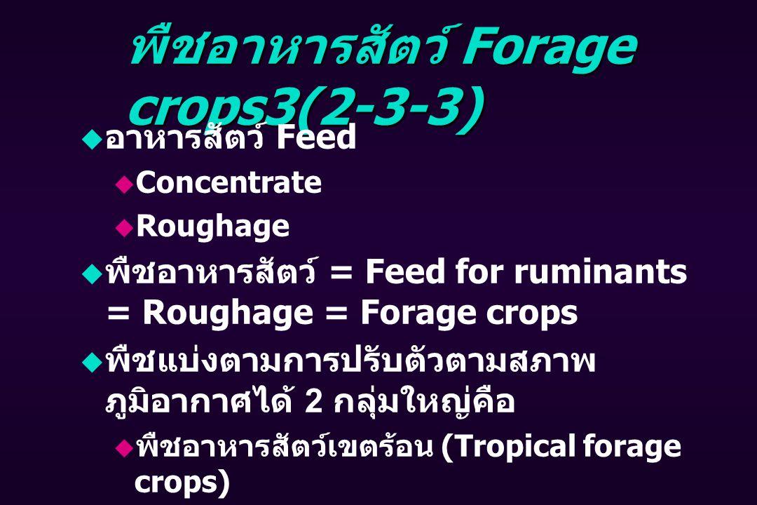 พืชอาหารสัตว์ Forage crops3(2-3-3)  อาหารสัตว์ Feed  Concentrate  Roughage  พืชอาหารสัตว์ = Feed for ruminants = Roughage = Forage crops  พืชแบ่งตามการปรับตัวตามสภาพ ภูมิอากาศได้ 2 กลุ่มใหญ่คือ  พืชอาหารสัตว์เขตร้อน (Tropical forage crops)  พืชอาหารสัตว์เขตอบอุ่น หรือเขตหนาว (Temperate forage crops)
