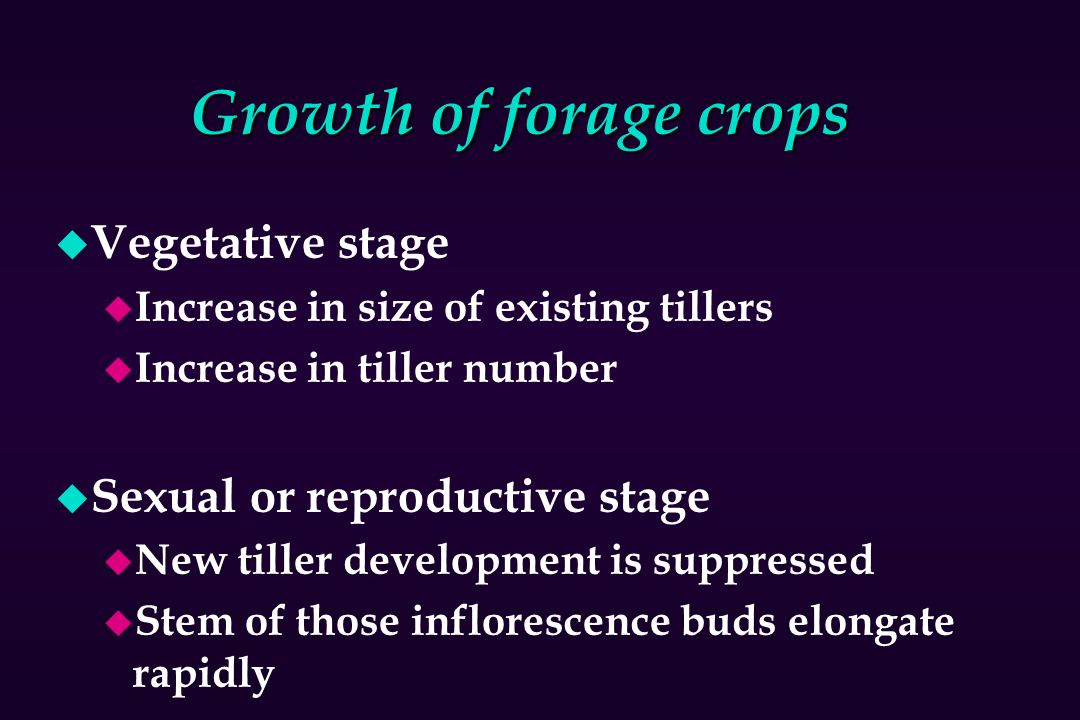 Growth of forage crops u Vegetative stage u Increase in size of existing tillers u Increase in tiller number u Sexual or reproductive stage u New till