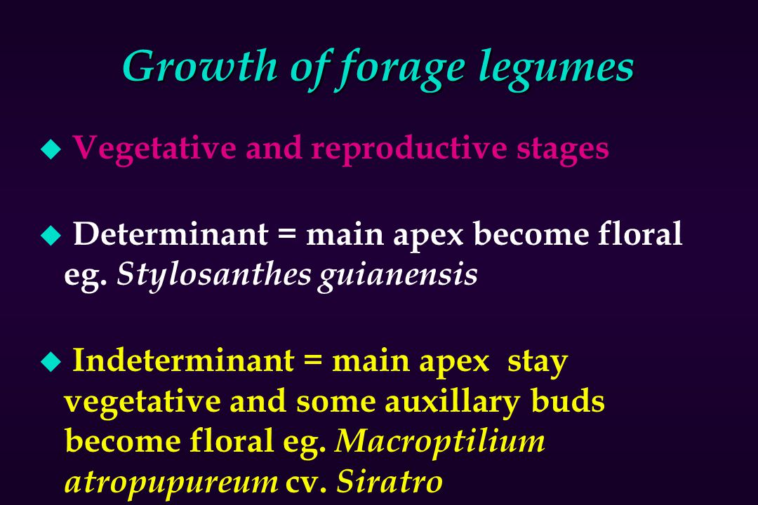 Growth of forage legumes u Vegetative and reproductive stages u Determinant = main apex become floral eg. Stylosanthes guianensis u Indeterminant = ma