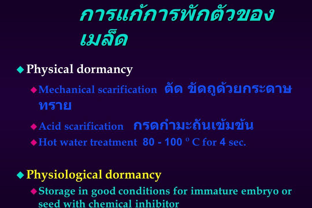 การแก้การพักตัวของ เมล็ด u Physical dormancy  Mechanical scarification ตัด ขัดถูด้วยกระดาษ ทราย  Acid scarification กรดกำมะถันเข้มข้น u Hot water treatment 80 - 100 o C for 4 sec.