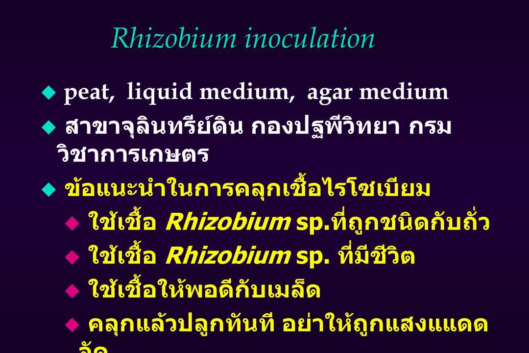 Rhizobium inoculation u peat, liquid medium, agar medium  สาขาจุลินทรีย์ดิน กองปฐพีวิทยา กรม วิชาการเกษตร  ข้อแนะนำในการคลุกเชื้อไรโซเบียม  ใช้เชื้อ Rhizobium sp.