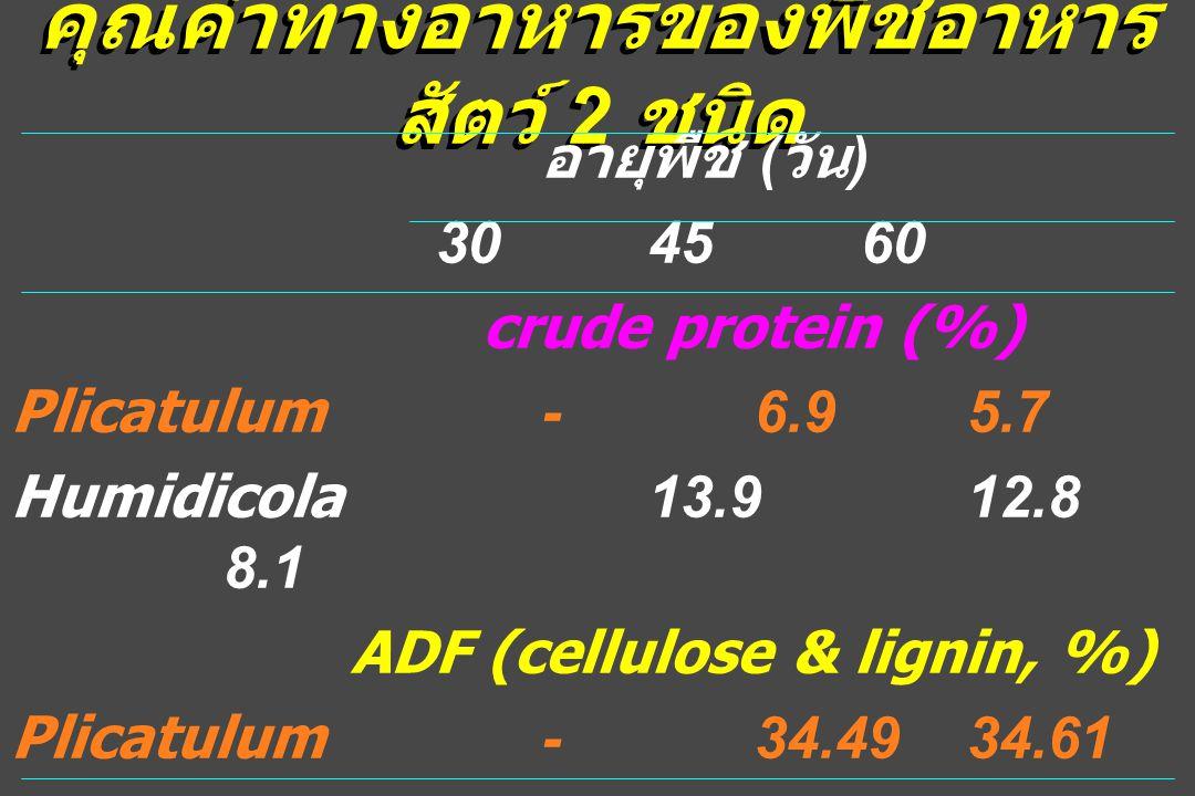 คุณค่าทางอาหารของพืชอาหาร สัตว์ 2 ชนิด อายุพืช ( วัน ) 304560 crude protein (%) Plicatulum-6.95.7 Humidicola13.912.8 8.1 ADF (cellulose & lignin, %) Plicatulum-34.4934.61 Humidicola43.9845.46 45.96