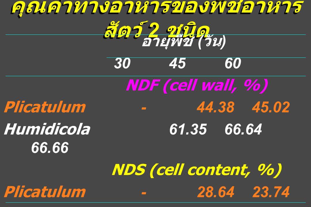 คุณค่าทางอาหารของพืชอาหาร สัตว์ 2 ชนิด อายุพืช ( วัน ) 304560 NDF (cell wall, %) Plicatulum-44.3845.02 Humidicola61.3566.64 66.66 NDS (cell content, %) Plicatulum-28.6423.74 Humidicola25.7927.13 27.91