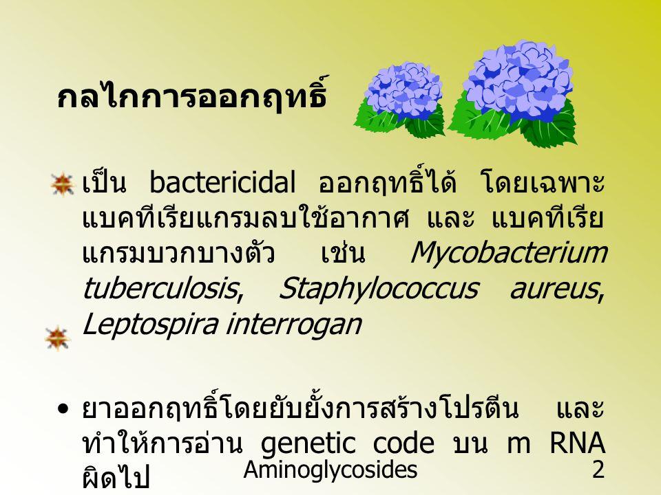 Aminoglycosides2 กลไกการออกฤทธิ์ เป็น bactericidal ออกฤทธิ์ได้ โดยเฉพาะ แบคทีเรียแกรมลบใช้อากาศ และ แบคทีเรีย แกรมบวกบางตัว เช่น Mycobacterium tubercu