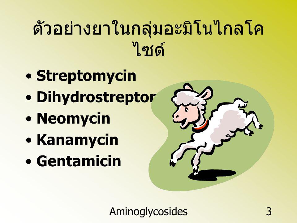 Aminoglycosides3 ตัวอย่างยาในกลุ่มอะมิโนไกลโค ไซด์ Streptomycin Dihydrostreptomycin Neomycin Kanamycin Gentamicin