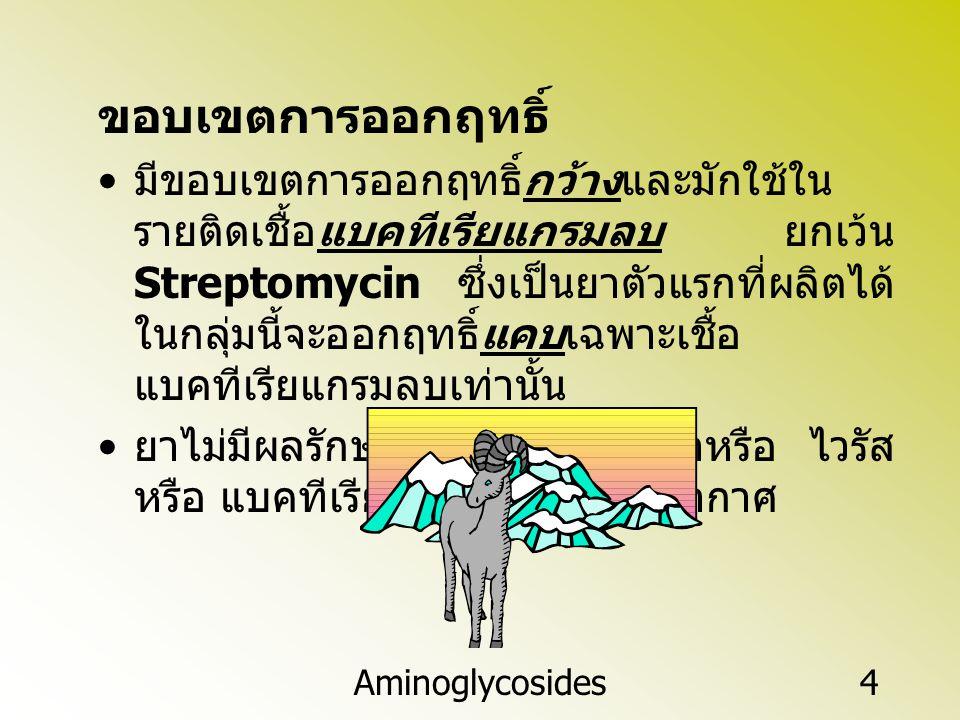 Aminoglycosides4 ขอบเขตการออกฤทธิ์ มีขอบเขตการออกฤทธิ์กว้างและมักใช้ใน รายติดเชื้อแบคทีเรียแกรมลบ ยกเว้น Streptomycin ซึ่งเป็นยาตัวแรกที่ผลิตได้ ในกลุ