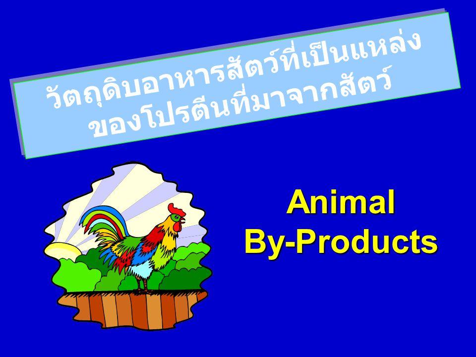 วัตถุดิบอาหารสัตว์ที่เป็นแหล่ง ของโปรตีนที่มาจากสัตว์ Animal By-Products