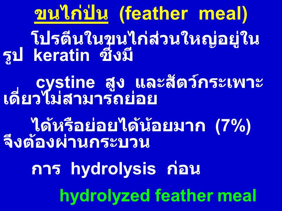 ขนไก่ป่น (feather meal) โปรตีนในขนไก่ส่วนใหญ่อยู่ใน รูป keratin ซึ่งมี cystine สูง และสัตว์กระเพาะ เดี่ยวไม่สามารถย่อย ได้หรือย่อยได้น้อยมาก (7%) จึงต