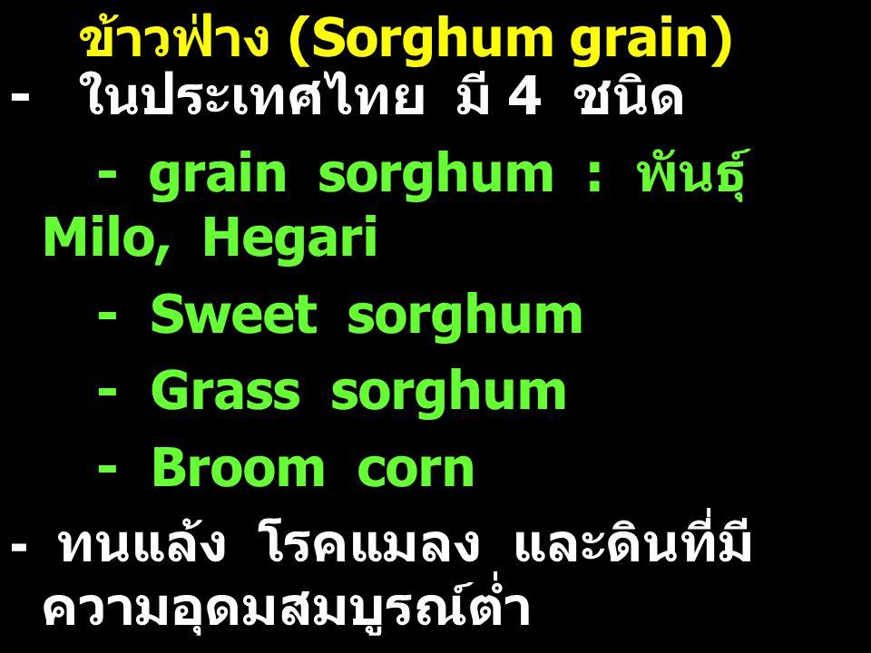 ข้าวฟ่าง (Sorghum grain) - ในประเทศไทย มี 4 ชนิด - grain sorghum : พันธุ์ Milo, Hegari - Sweet sorghum - Grass sorghum - Broom corn - ทนแล้ง โรคแมลง แ