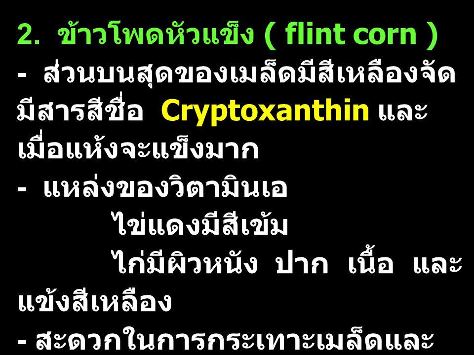 2. ข้าวโพดหัวแข็ง ( flint corn ) - ส่วนบนสุดของเมล็ดมีสีเหลืองจัด มีสารสีชื่อ Cryptoxanthin และ เมื่อแห้งจะแข็งมาก - แหล่งของวิตามินเอ ไข่แดงมีสีเข้ม