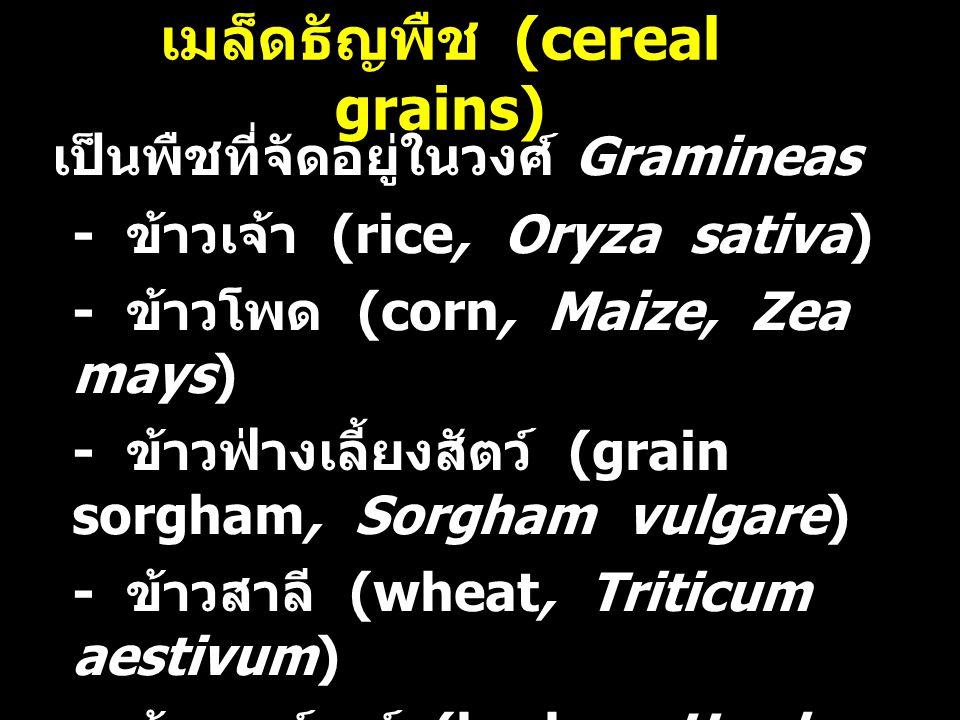 เมล็ดธัญพืช (cereal grains) เป็นพืชที่จัดอยู่ในวงศ์ Gramineas - ข้าวเจ้า (rice, Oryza sativa) - ข้าวโพด (corn, Maize, Zea mays) - ข้าวฟ่างเลี้ยงสัตว์ (grain sorgham, Sorgham vulgare) - ข้าวสาลี (wheat, Triticum aestivum) - ข้าวบาร์เลย์ (barley, Hordeum vulgare or H.sativum) - ข้าวโอ้ต (oats, Avena sativa)